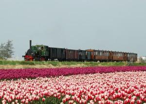 Stoomtram in tulpen1