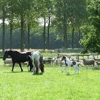 Agrarische excursies
